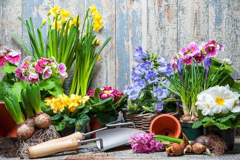Zahrada a květiny